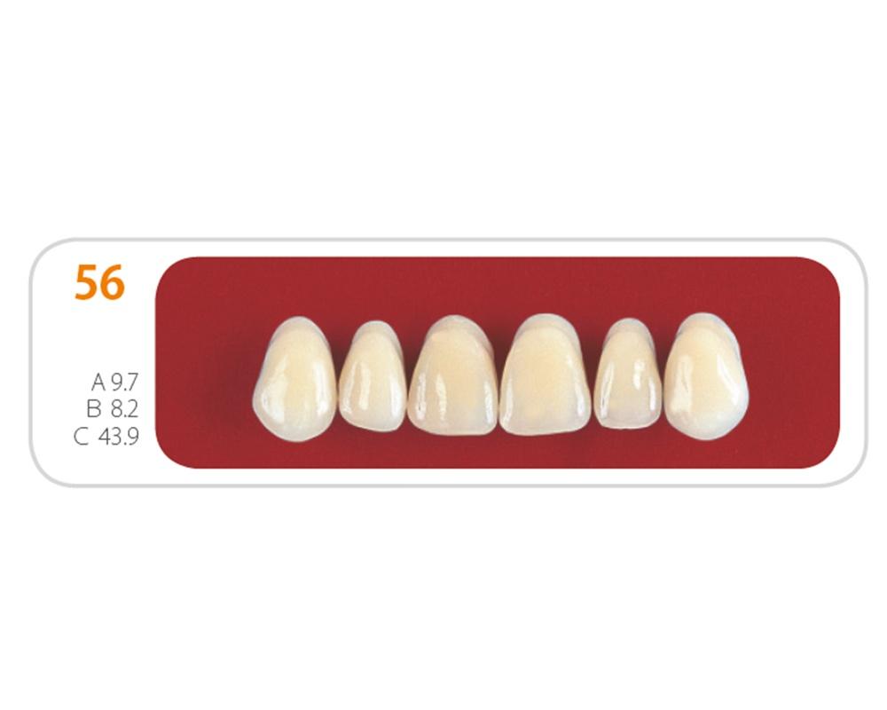 Зубы - Зубы Uniсryl 56
