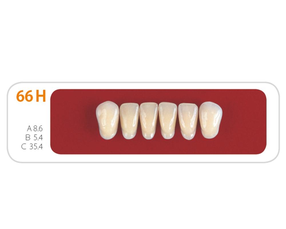 Зубы - Зубы Uniсryl 66H