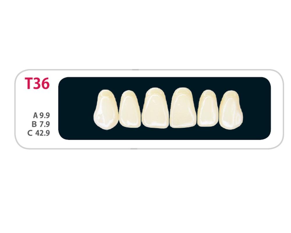 Зубы - Зубы Uniсryl Plus T36