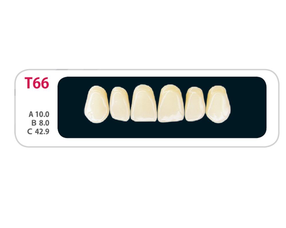 Зубы - Зубы Uniсryl Plus T66
